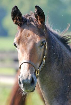 kentucky-horse