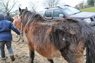 Rescuers remove the horses from a property in Caerphilly.