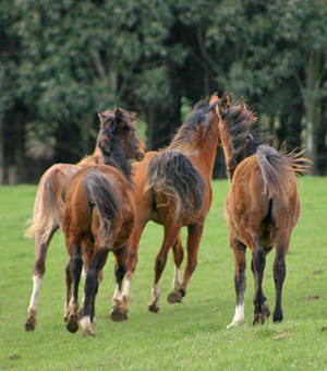 Allowing horses to be horses in a group setting is important to their mental  and physical wellbeing, a Danish professor says.