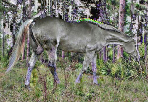 We superimposed the two pictures placing on the back the horse sustaining the trunk higher between the forelegs. The yellow doted line follows the top line of the horse sustaining the trunk higher between the forelegs. The green doted line follows the top line of the horse sagging the trunk between the front limbs.