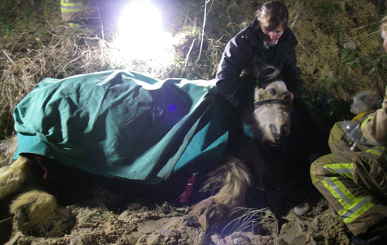 RSPCA inspector Nicky Thorne comforts a horse after she found it found hanging by its neck over a cliff.