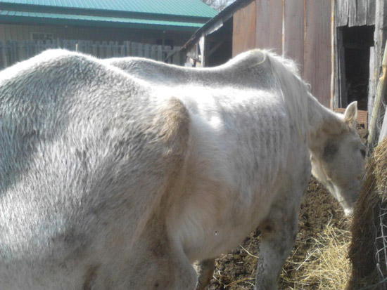 The blind mare seized by Ohio authorities.