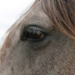 219 violations of Horse Protection Act found at walking horse show