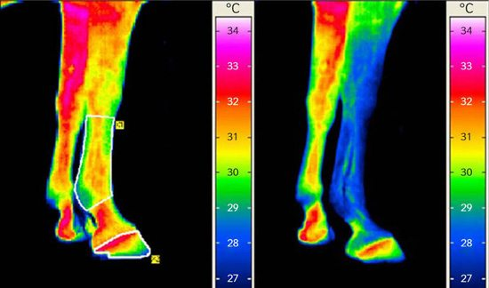 Drafts affect infrared thermography results - Horsetalk.co.nz