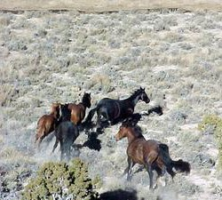 Stand-off over 186 wild horses the BLM wants to release
