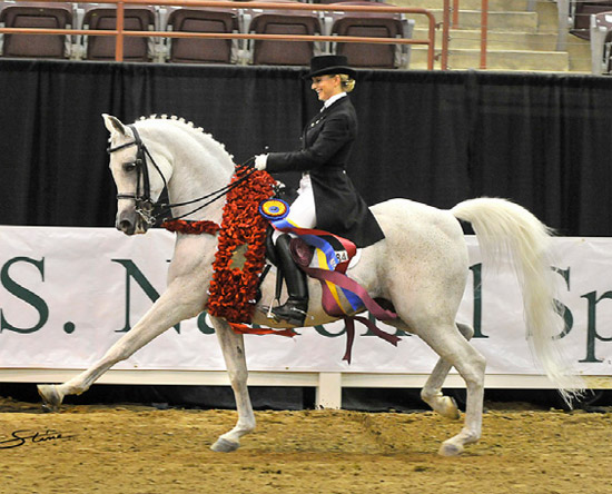 Arabian dressage horse a record breaker - Horsetalk.co.nz