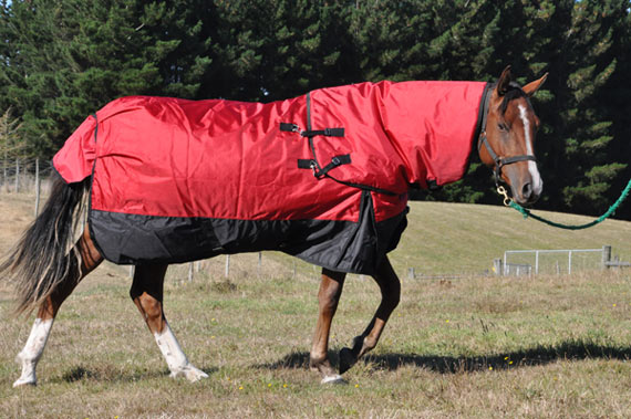 Does Your Horse Really Want To Be Rugged Horsetalk Co Nz New Zealand Pony Rug