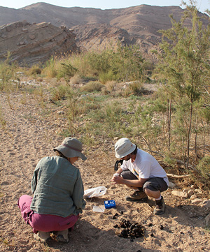 Shirli Bar David and Gili Greenbaum collecting DNA evidence.