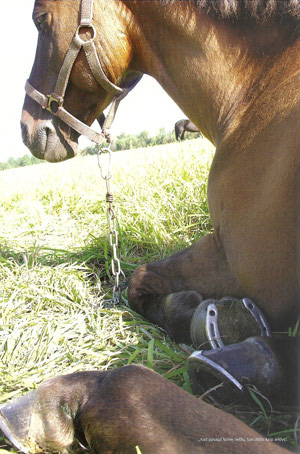 A Žemaitukai horse.