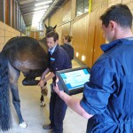 Flexion testing, using the sensor-based system, at the University of Glasgow's School of Veterinary Medicine.