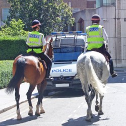 Horses make great police ambassadors, research suggests