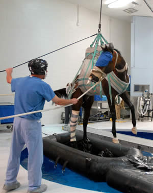 Hydropool recovery is one of the methods used by  equine hospitals following anesthesia. Here, Barbaro undergoes recovery from an operation at the University of Pennsylvania.