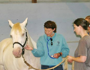 OK with horse handler Carrie Bowling and nurse researchers Janine Lindgreen and Carol Noriega practicing the Patient Care Corral exercise during the workshop development phase.