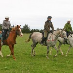 Benefits of rising trot identified in research