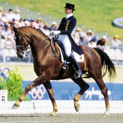 Two clones from Olympic dressage horse Rusty