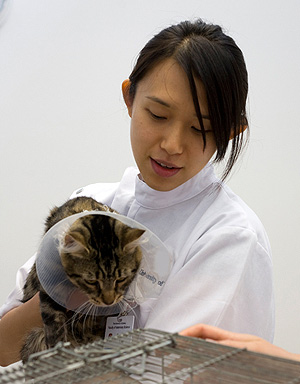 Almost half of veterinarians contract an infection from animals during their career.