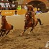 Utah looks to ban horse tripping