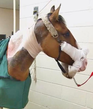 An equine veterinarian and a burn surgeon are providing a second chance at a normal life for Northstar.