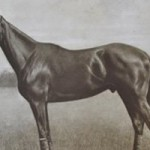 Phar Lap's DNA to be sequenced