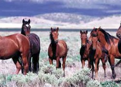 Navajo elders voice opposition to horse slaughter