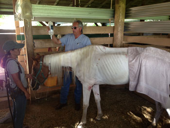 Susie receives intravenous fluids during her bout of colic.