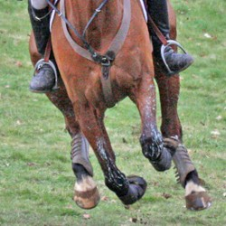 Biomarkers show potential for monitoring fitness of horses – study
