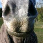 Do nasal strips help horses?