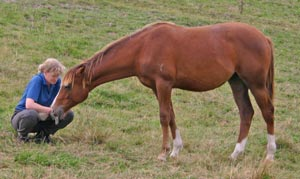 The tone you take with a horse can make all the difference, research suggests.
