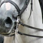 Researchers probe influence of dressage rein tension
