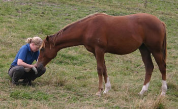 Some horse owners say they prefer the temperament of mares. Recent research casts some light on that preference.