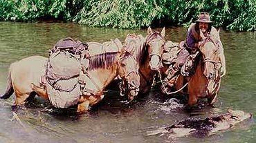 Wamser and his Criollo horses from the pampas.