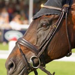 Bling browband: Le Prince Des Bois
