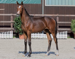 Cascadello-filly-2