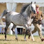 Scientists identify hot spot for Arabian horse diversity