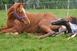 foaling-feat_8571