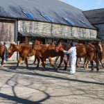 Caption: A group of thoroughbreds being received into Glenda Spooner Farm. Photo: World Horse Welfare