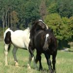 Scientists invent foot-operated horse ventilator