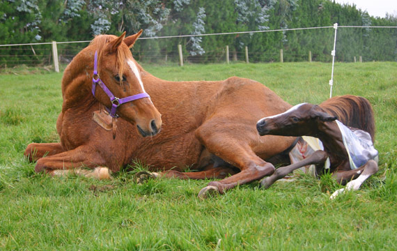 Although there is no advantage for the foal to remain connected to the mare after birth, it won't hurt to leave them alone to rest.