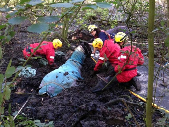 Firefighters prepare for the successful rescue of two horses from a Cheshire bog. Photo: Cheshire Fire & Rescue