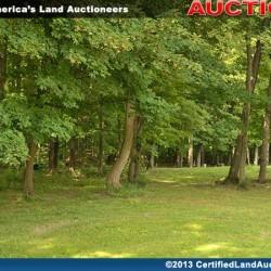 Cleveland-equine-auction