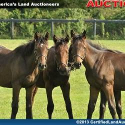 Cleveland-farm-land-sale