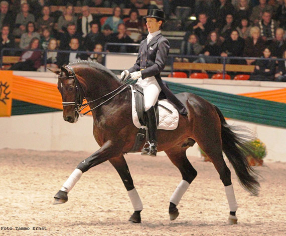 Trakehner stallion of the year Distelzar.