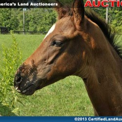 Geauga-County-Horse-Property-auction