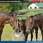 Ohio-equine-auction