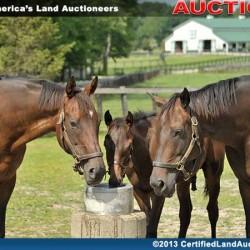 Ohio-equine-auction