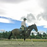 Teaching vet students equitation science could help safety, conference told