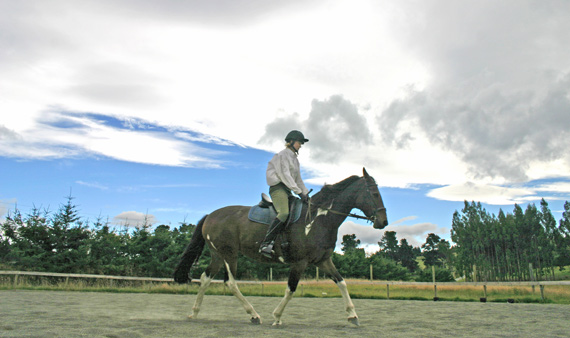 Caregivers are not adept at spotting back disorders in horses, a new study shows.