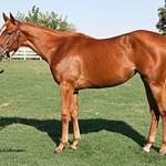 The Unusual Heat-Practically Perfect filly whose $US57,000 sale price raised money for retired California racehorses.