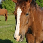 New grant fund for young equine researchers