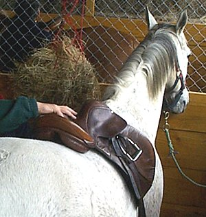 saddle-fitting1